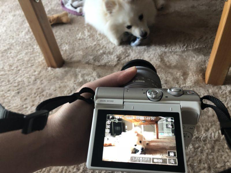 カメラ女子部