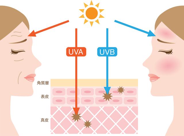これでもう怖くない!紫外線について正しく理解していますか?